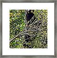 Standing Black Bear Framed Print