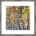 Standing Timbers At Merrill Creek Framed Print