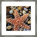 Starfish On Rocks Framed Print