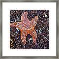 Starfish - Oregon Coastline Framed Print