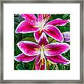 Stargazer Oriental Lilies Framed Print