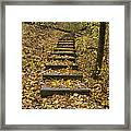 Step Trail In Woods 14 Framed Print