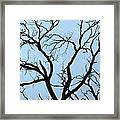 Stormy Trees Framed Print