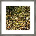 Stream Water Framed Print
