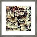 Stump Fungshroom Framed Print