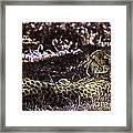 Styled Environment-the Modern Trendy Cheetah Framed Print