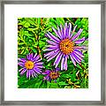 Subalpine Daisy By Vidae Falls In Crater Lake National Park-oregon  Framed Print