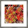 Succulent 3 Framed Print
