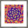Succulent 7 Framed Print