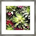 Succulent Beauties Framed Print
