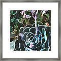 Succulent Flower Caught In A Moonbeam Framed Print