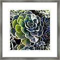 Succulent Framed Print