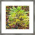 Sumac Leaves In The Fall Framed Print