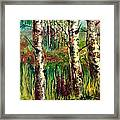 Summer Birch Framed Print