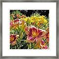 Summer Daylilies Framed Print