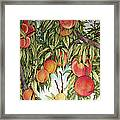 Summer Peaches Framed Print by Helen Klebesadel
