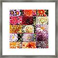 Summer Roses And Dahlias 2013 Framed Print