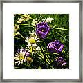 Summer Scents Framed Print