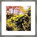 Summer Trees Framed Print