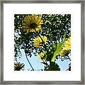 Summer Viewpoint Framed Print