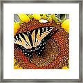 Sunbather Framed Print by Cole Black