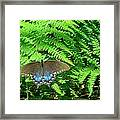 Sunbathing Butterfly Framed Print