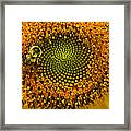 Sunflower An Bumble Framed Print by Brittany Perez