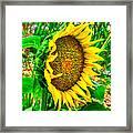 Sunflower Bloom Framed Print