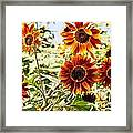 Sunflower Cluster Framed Print