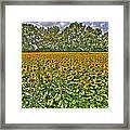 Sunflower Fields Ford World Headquarters Dearborn Mi Framed Print