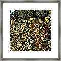 Sunflower Fields Forever Framed Print