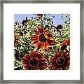 Sunflower Layers Framed Print
