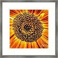 Sunflower Macro Framed Print
