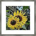 Sunflower Under The Gables Framed Print