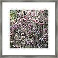 Sunlight On Saucer Magnolias Framed Print