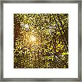 Sunlight Shining Through A Forest Canopy Framed Print