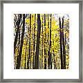 Sunburst Through Trees Framed Print