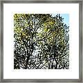 Sunlit 14-1 Framed Print