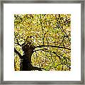 Sunlit Autumn Tree Framed Print by Natalie Kinnear