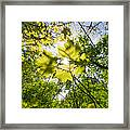 Sunlit Leaves Framed Print