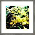 Sunlit Seaweed Framed Print