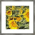 Sunning With Friends Framed Print