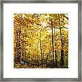 Sunrise In The Forest Framed Print by James Hammen