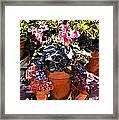 Sunshine And Flowerpots Framed Print