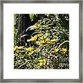 Sunshine Flower 3 Framed Print