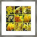 Sunshine Gold Picture Window Framed Print