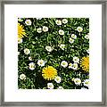 Sunshine In The Daisies Framed Print