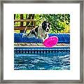 Super Dog 2 Framed Print