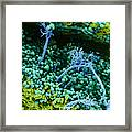 Surface Of Leaf With Fungal Infections Framed Print