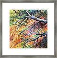 Sway Dancing Trees Framed Print